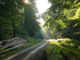 Radtour durch den Spessartwald