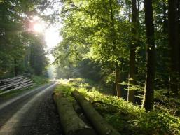 Gegenlichtstimmung auf Forstweg im Spessartwald
