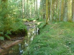 Der Fließenbach durchfließt ein Spessarttal