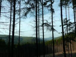 Waldrodung am Schellhofberg