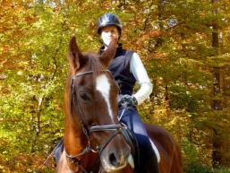 Pferde- und Reitparadies Sinngrund