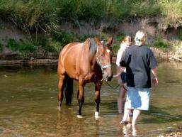 Pferdeerfrischung an der Sinn