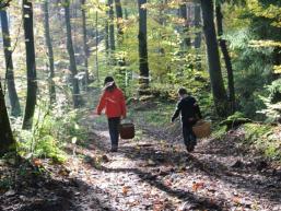 Mit Körben zum Pilze suchen in den Wald