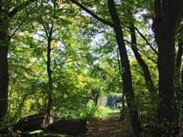 Wanderweg in Rieneck