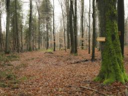 Abzweigung von der Birkenhainer zum Bildstock Elisabethenzell