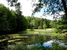 Waldweiher im Spessart