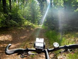 Lichte Waldmomente