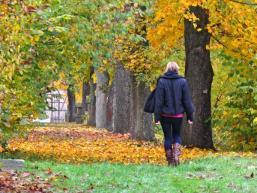 Herbst im Spessart - Die Vergänglichkeit bedenken