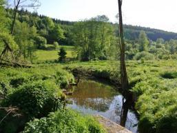 Auch der Biber wohnt im Tal der Aura