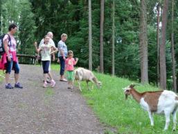 Ziegen sind neugierig und eigentlich immer hungrig