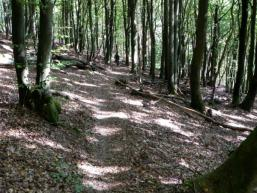 Biken zum Märchenwald