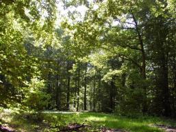 Waldlichtung im Laubwald