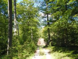 Waldweg im Spessart