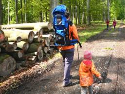 Wald, Holz, Natur
