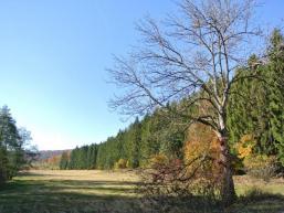 Herbstliche Spessartlandschaft