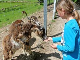 Die Tiere fressen aus der Hand im Tierpark Heigenbrücken