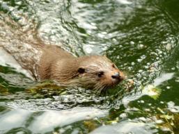 Den Otter beobachten macht Spaß