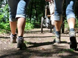 Auf Schusters Rappen durch den Spessart unterwegs - Waldwege laden zum Wandern ein